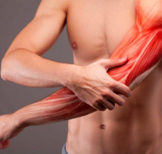 Молочная кислота: польза и вред для мышц