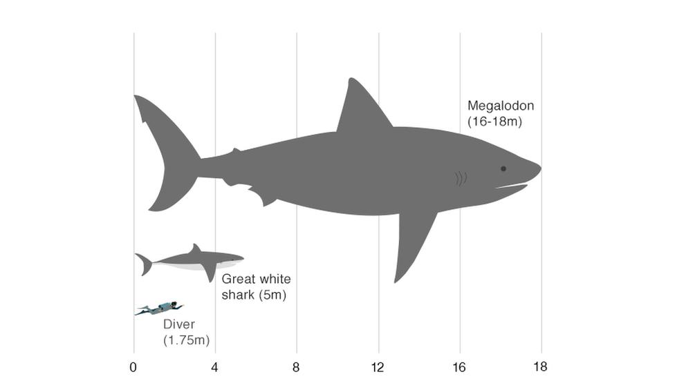 Акула-мегалодон: топ 10 удивительных фактов об этом ужасном чудовище :: инфониак