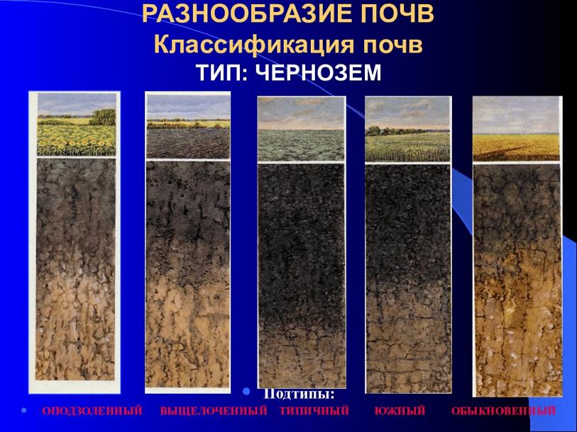 Полная характеристика чернозема — подзоны чернозема, состав, фото