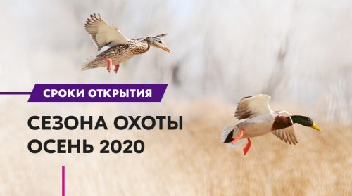 Биологические особенности миграции животных