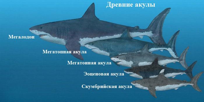 Где живет мегалодон? ∞ лагуна акул