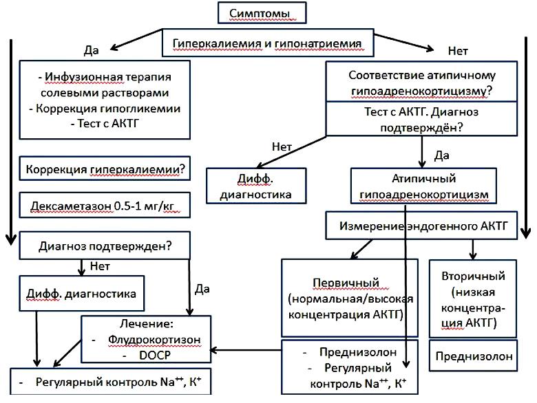 Гипонатриемия: причины и развитие, формы, проявления, диагностика, принципы терапии