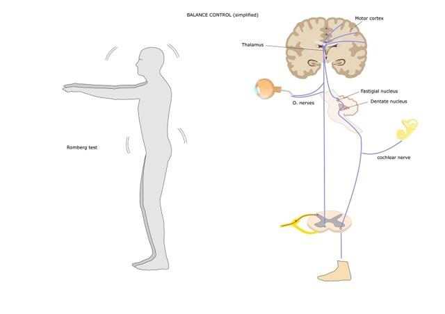 Эндокринная система (общая характеристика, терминология, строение и функции эндокринных желез и гормонов)