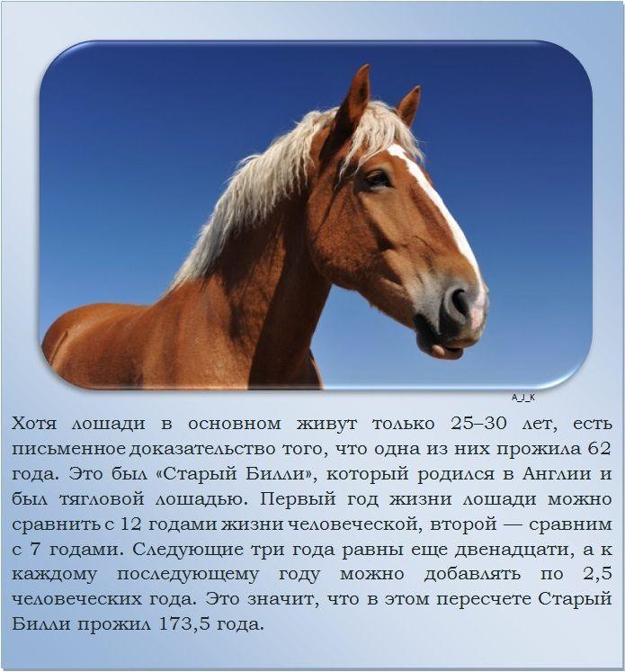 Центральный московский ипподром - ипподром - ипподром.ру