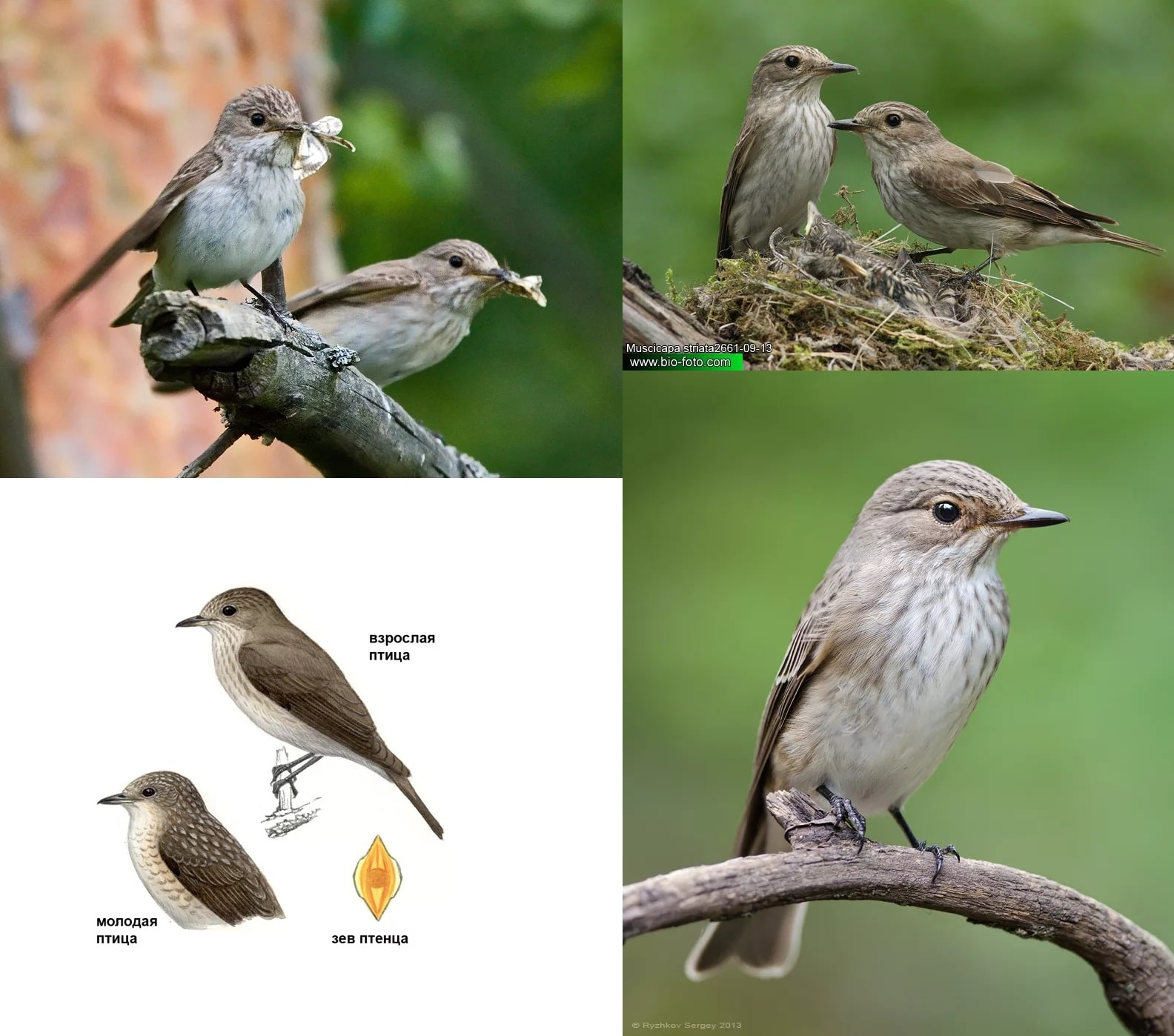 Отряды класса птиц — список, названия, фото и краткое описание