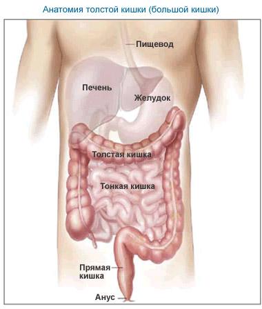 Перистальтика кишечника: симптомы и способы восстановления