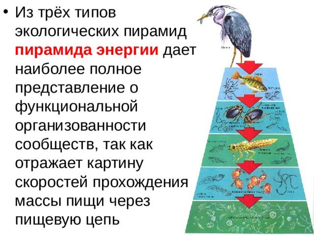 1.что такое экологическая пирамида?какие процессы в сообществе она отражает? 2.в чем отличие пирамид численности и энергии? 3.почему пирамида численност, биология