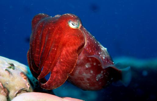 Лечебные свойства панцирь каракатицы