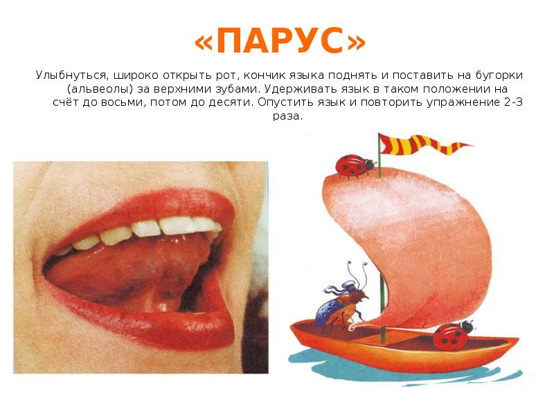 Что такое альвеолы во рту