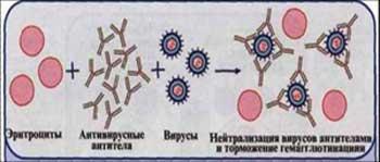 Реакция нейтрализации: понятие и сущность, формулы, уравнения и примеры взаимодействия веществ в химии