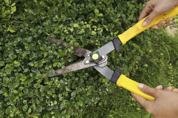 Секатор садовый: как правильно выбрать хороший инструмент для участка