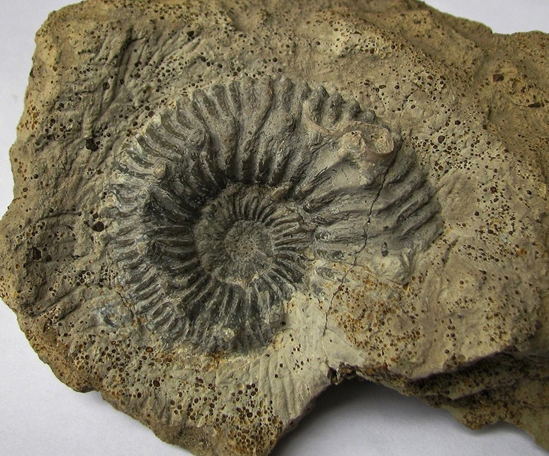 Палеонтология — википедия