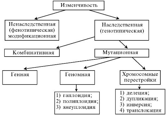 Мутации, их виды, биологическая роль и мутагенные факторы