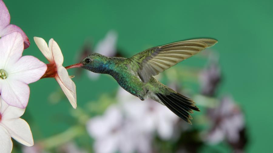 Что символизирует разноцветная колибри — eta-dzeta.ru
