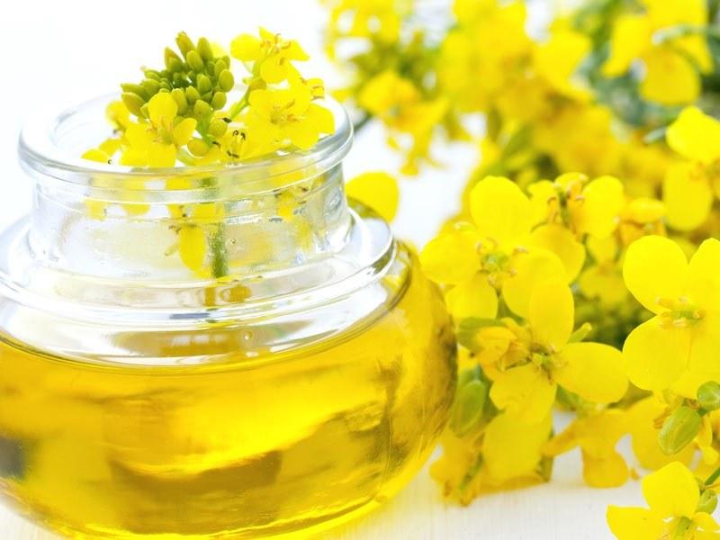 Рапсовое масло: вред и польза для организма человека