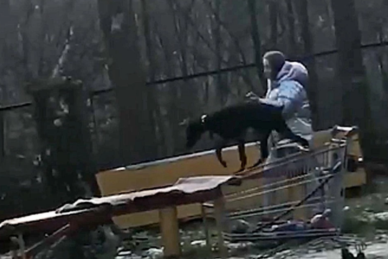 Собачий питомник в москве: адрес, описание, условия содержания животных, фото
