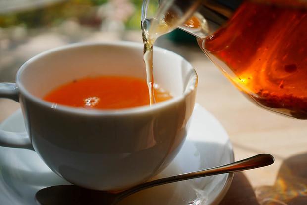 Грибы чага: свойства, как выглядят и как правильно их пить