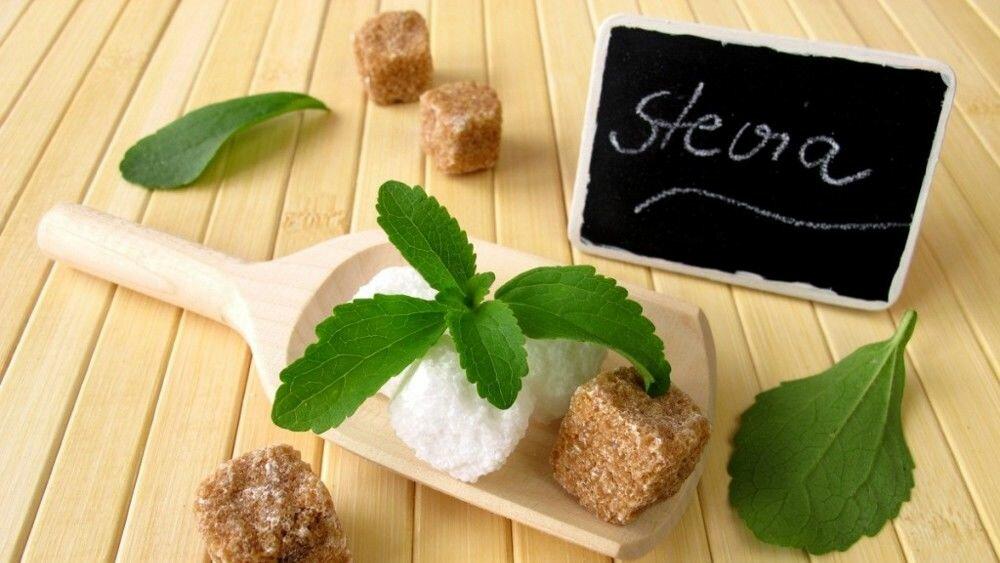 Стевия – описание растения, польза и вред, состав, применение в качестве сахарозаменителя и лекарственной травы