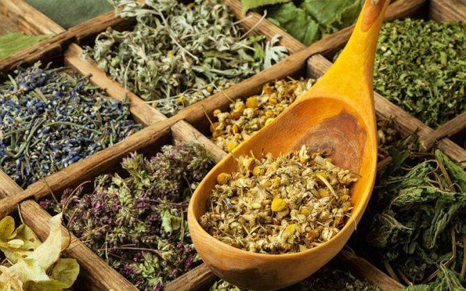 Секреты фитотерапии — можно ли вылечиться травами