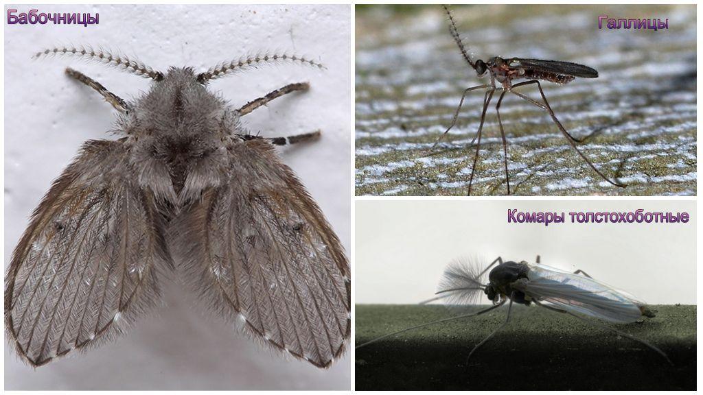 Интересные факты о комарах – увлекательно о простом