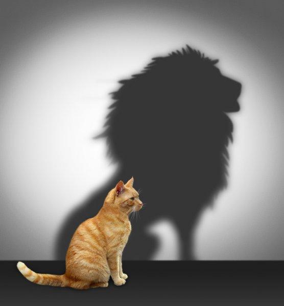 Духовная и физическая смелость