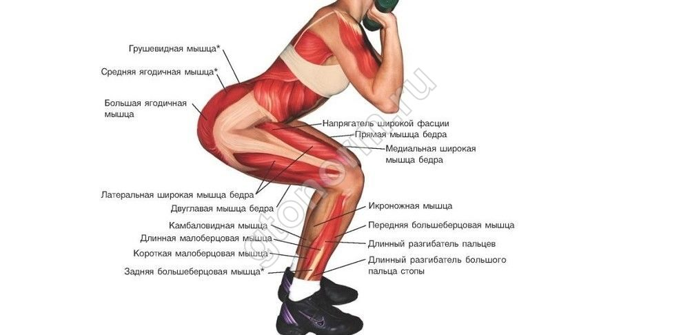 Приседания плие: техника и особенности упражнения | rulebody.ru — правила тела