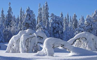 Сергей есенин - пороша: читать стих, текст стихотворения онлайн про зиму - рустих