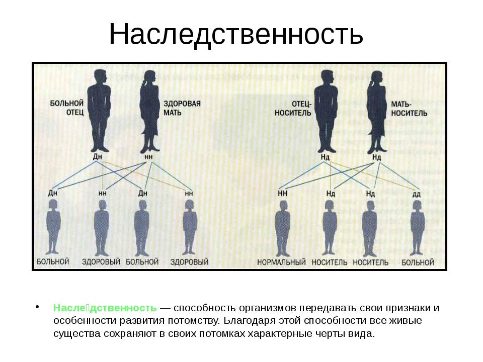 Что такое наследственность и генетика человека?