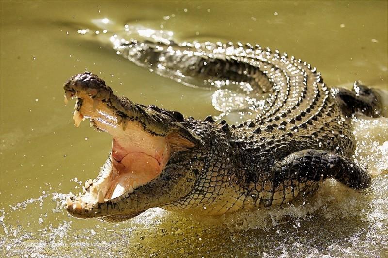 Игра «крокодил»: смешные слова скачать бесплатно