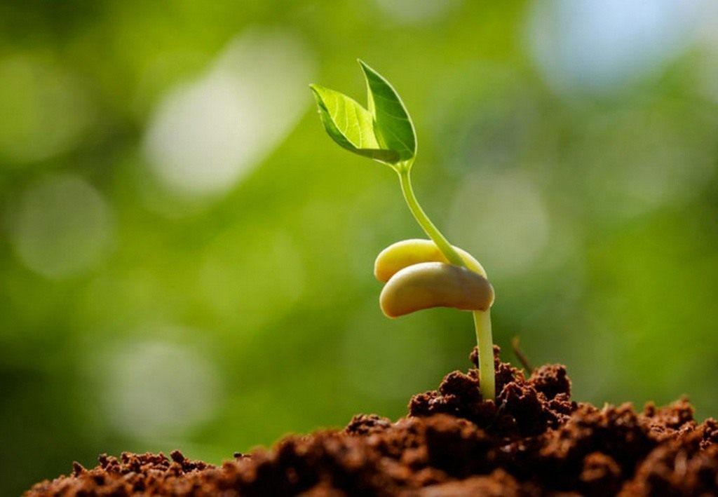 Стратификация семян в домашних условиях: что это такое, как правильно сделать?