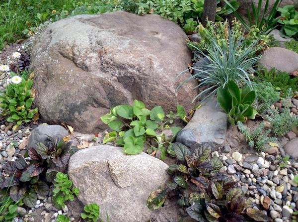 Рокарий своими руками: пошаговая инструкция, рекомендации, идеи с фото – сад и огород своими руками