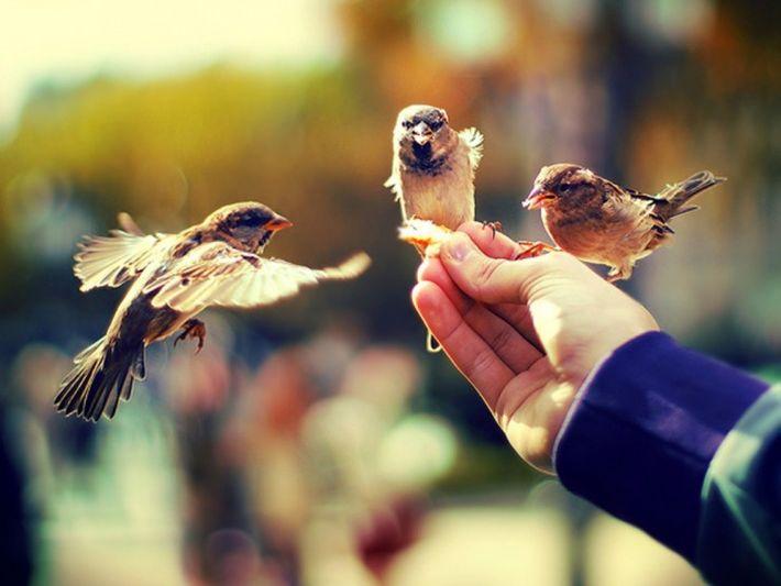 Что такое щедрость души?