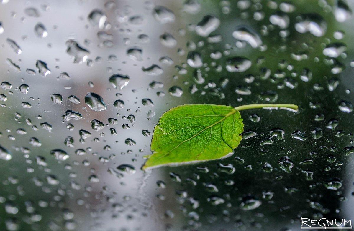 Дождь - что такое: описание, происхождение и интересные факты