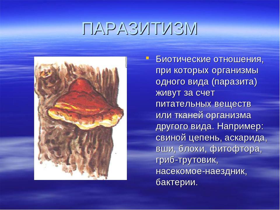 Что такое паразитизм? определение, синоним