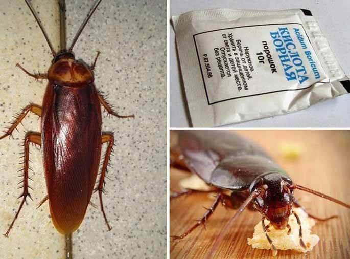 """От чего в квартирах появляются тараканы: основные причины и условия - служба дезинфекции """"экоконтроль"""""""