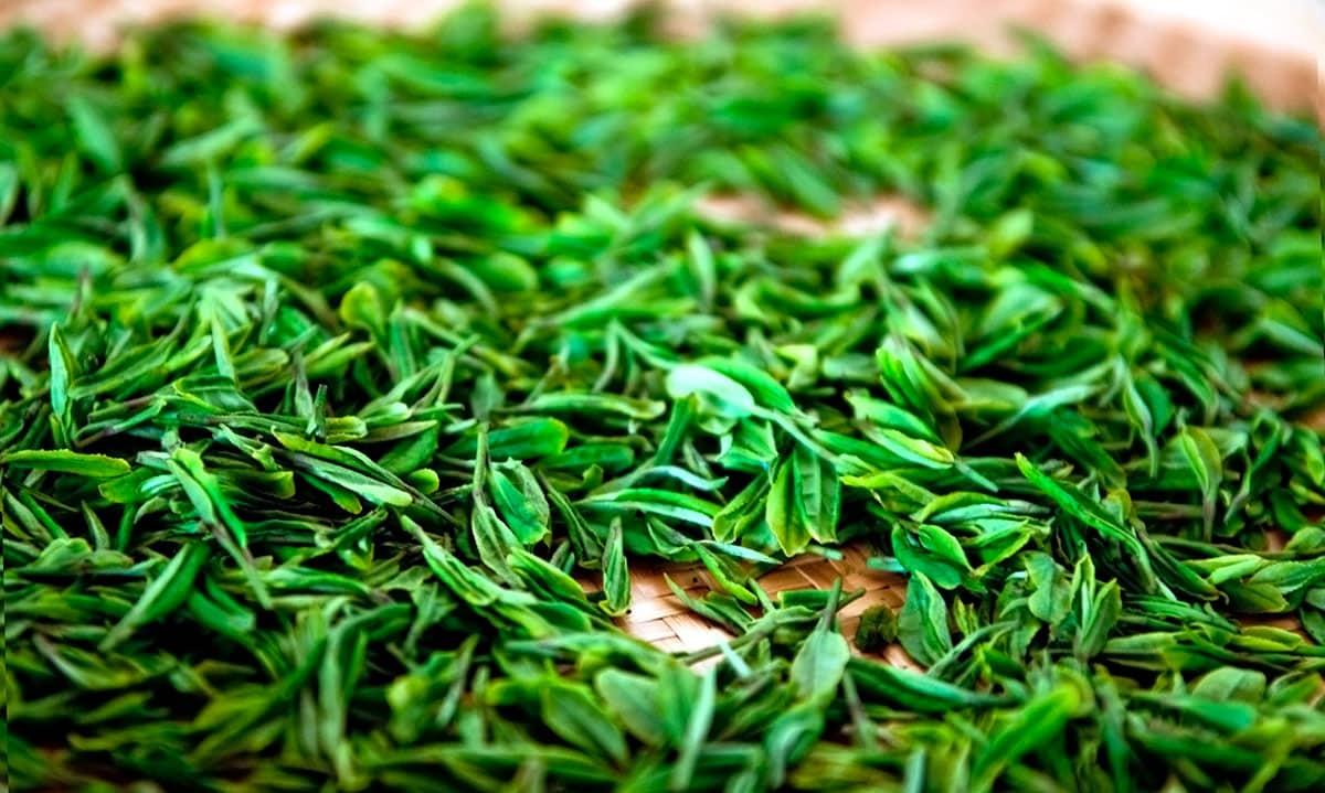 8 ферментированных продуктов: список самой полезной пищи