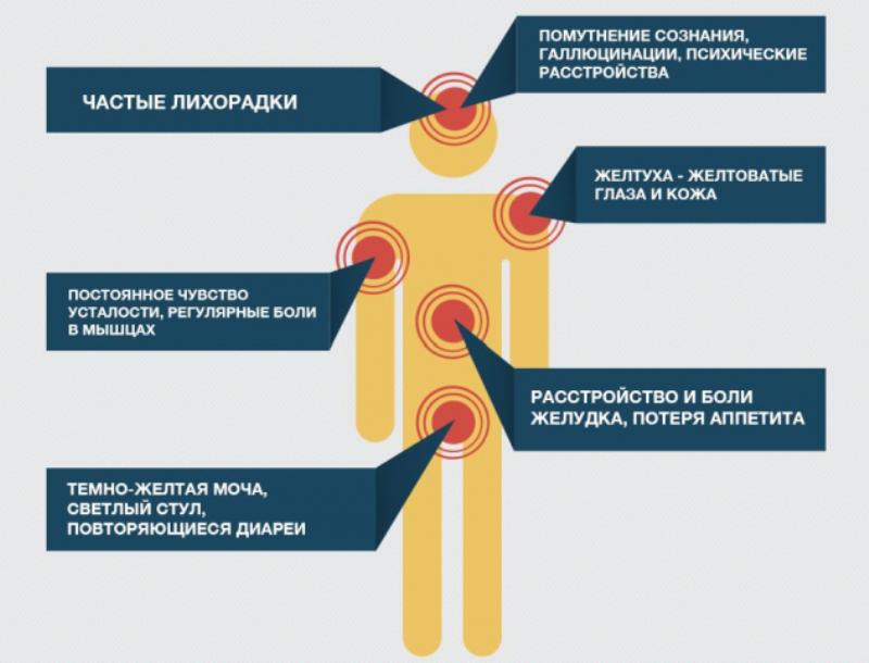 Гепатит в и гепатит с: что это такое и как передается