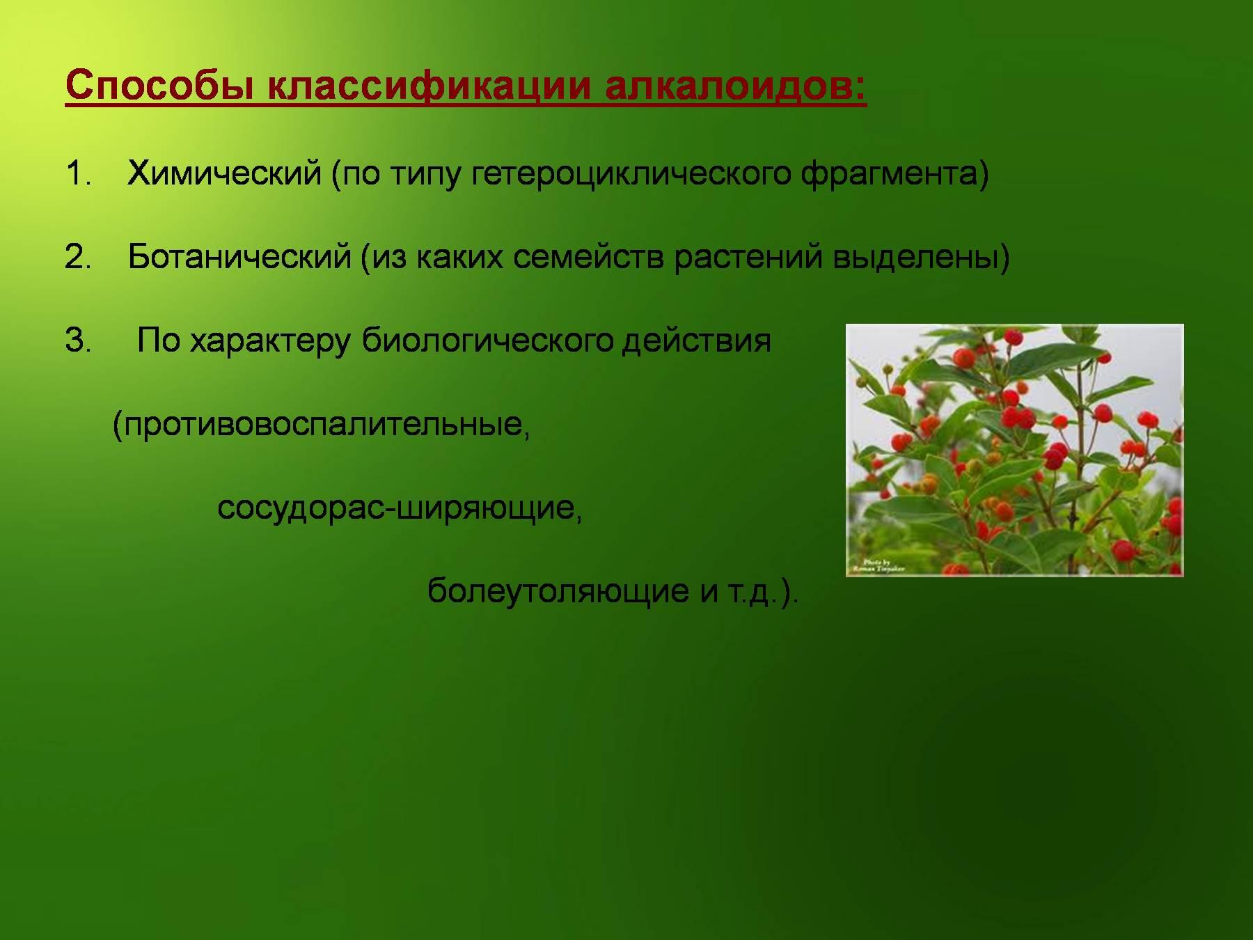 Алкалоид - это... классификация алкалоидов, характеристика