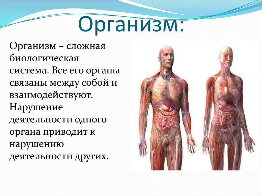 Что такое организм: определение, функции, виды и особенности