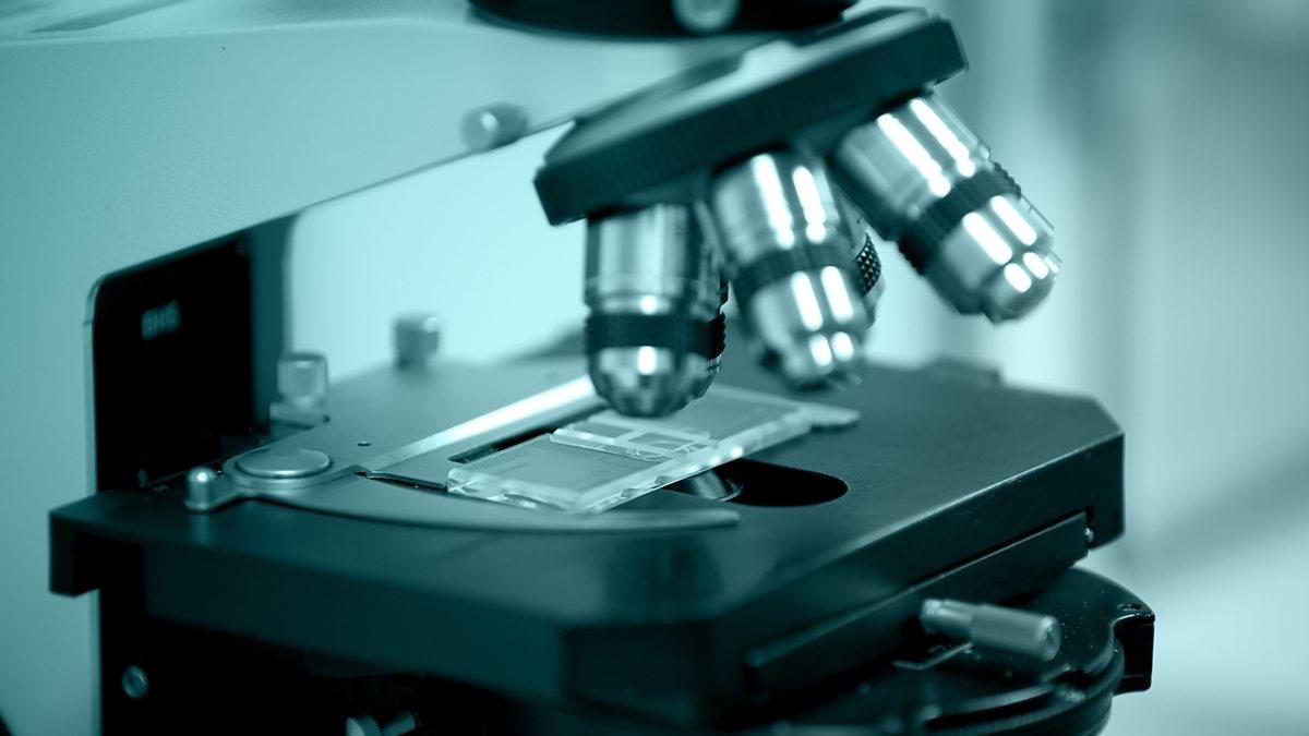 Иммуногистохимия: полное описание метода