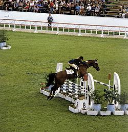 Конкур: что это за конный спорт
