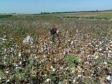 Отрасли растениеводства: особенности и перспективы