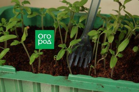 Как вырастить рассаду в домашних условиях – подробное руководство