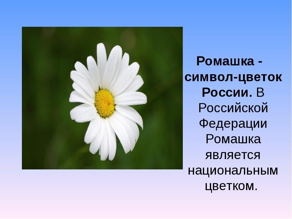 Цветы комнатные каталог с фотографиями и названиями