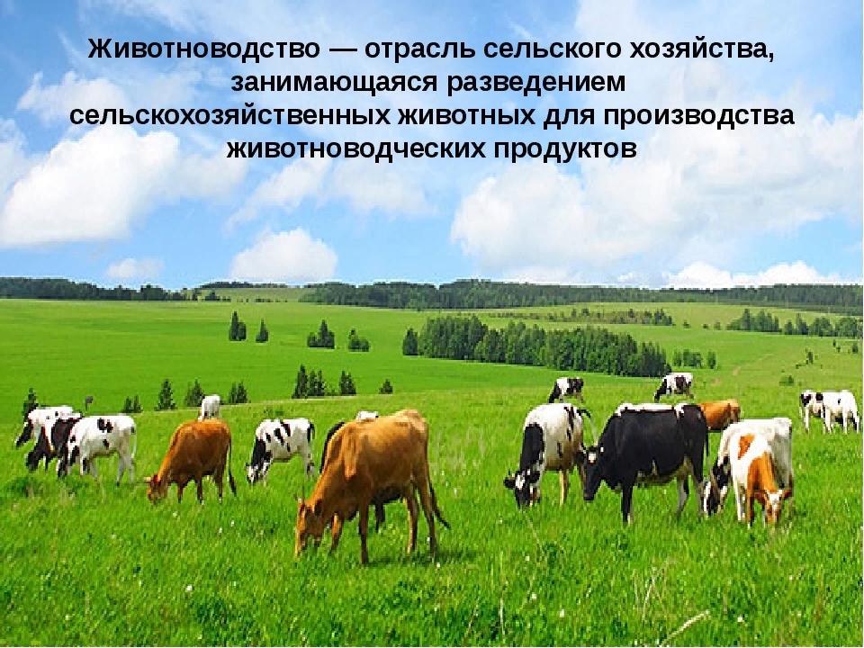 Животноводство — википедия. что такое животноводство