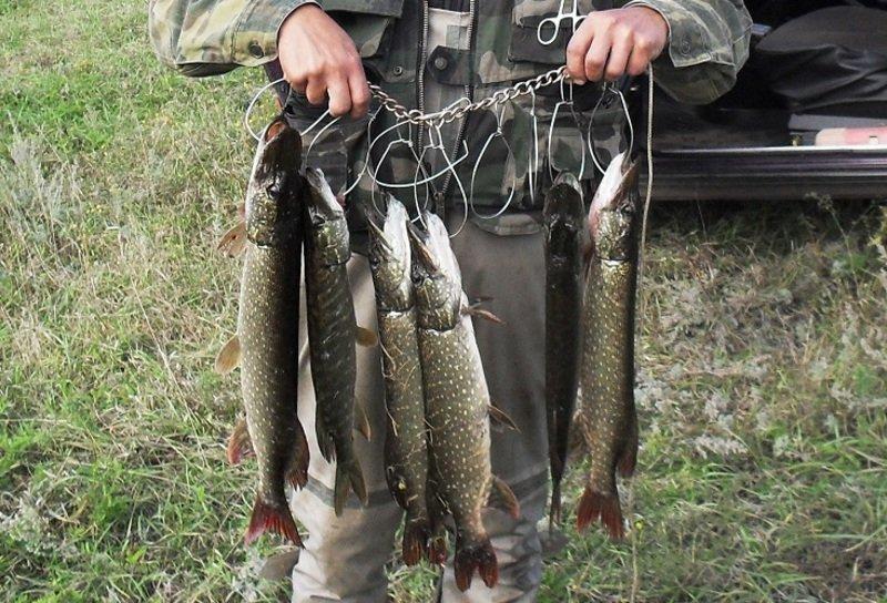 Что такое кукан для рыбалки