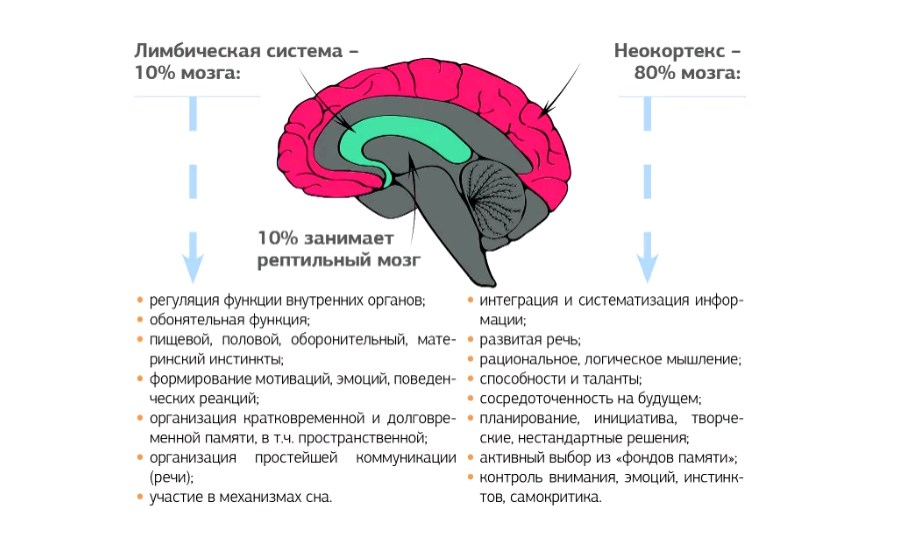 У  каждого из нас три разума и три мозга. но где живет творчество?