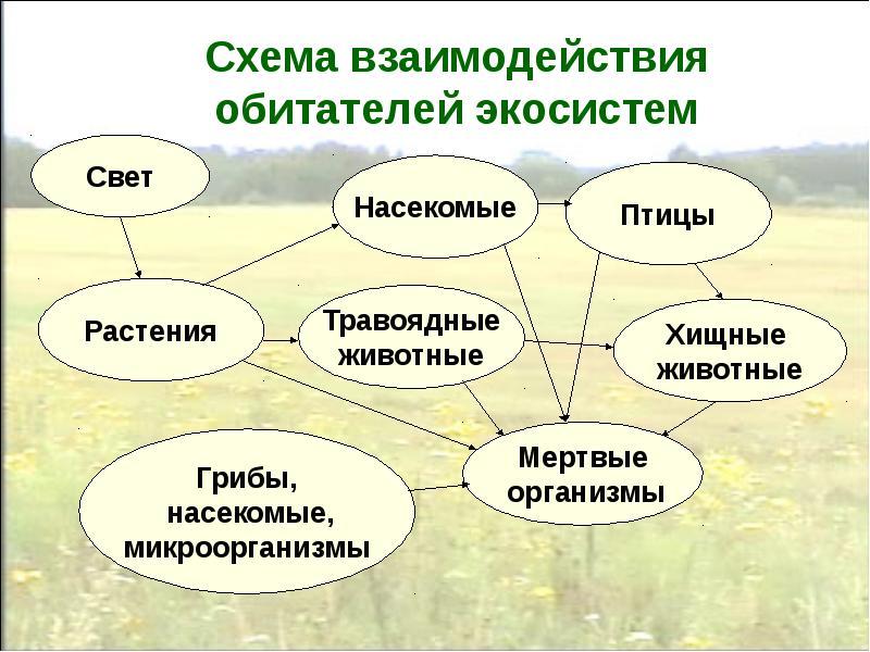 Состав и свойства экосистем. функции экосистем