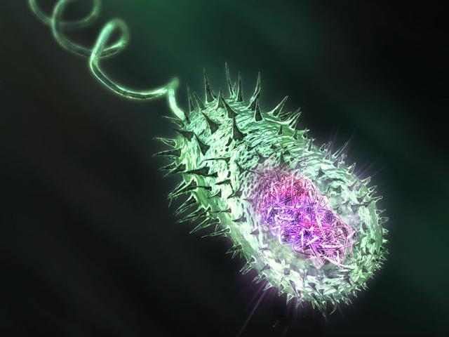 Холера. возбудитель заболевания - холерный вибрион. симптомы, лечение и профилактика. фото
