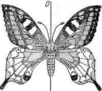 Симметрия - symmetry - qwe.wiki